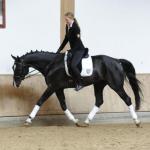 расслабление лошади