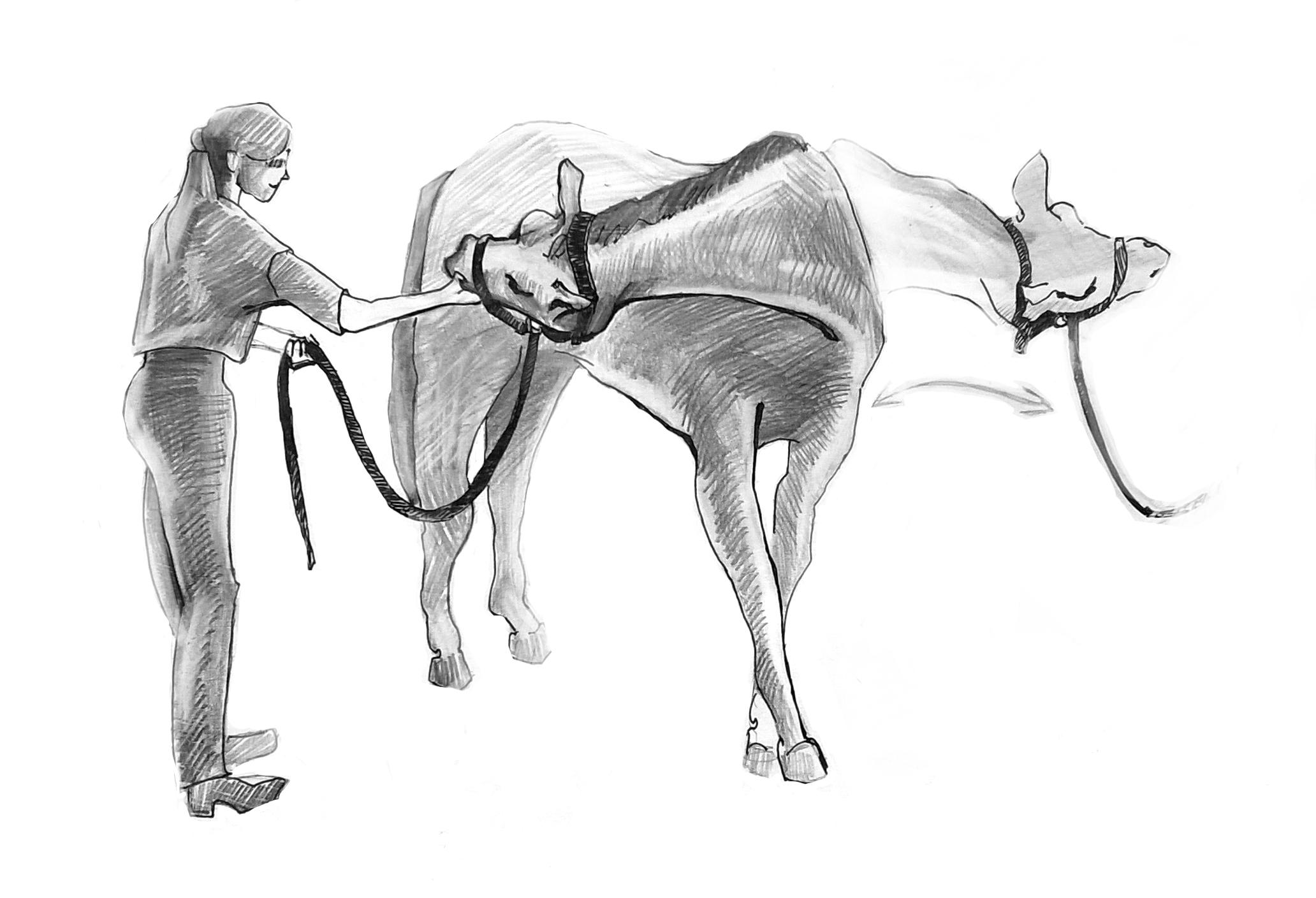 гимнастика для лошади